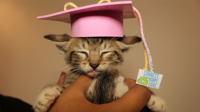 kitten with hat on